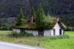 zielony-dach1
