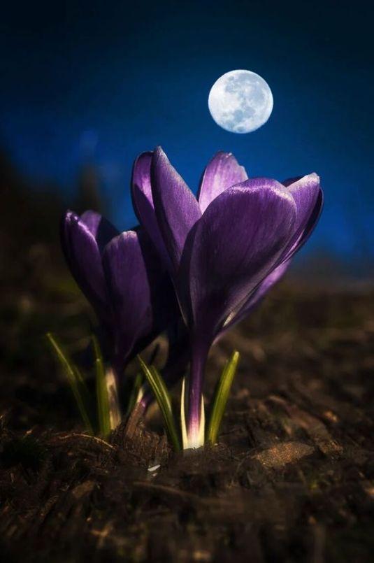storm-moon1